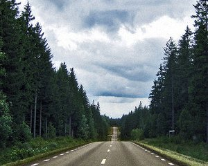 Forest_road2.jpg
