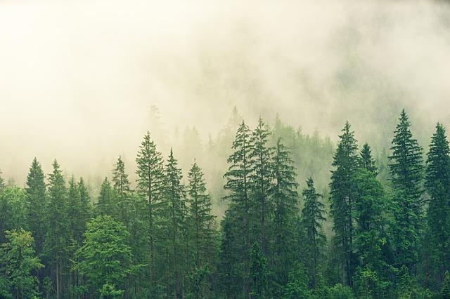fog-3622519_640.jpg
