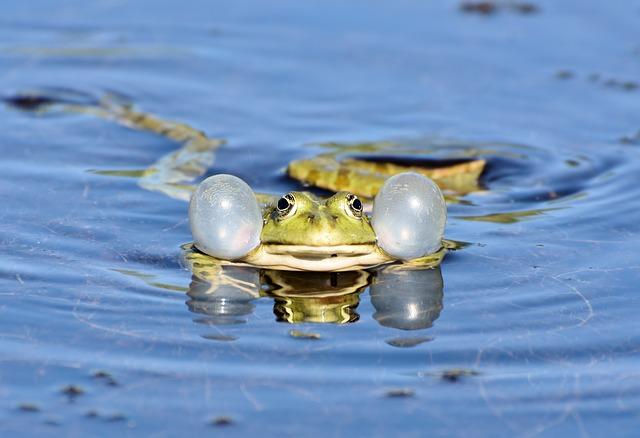 frog-3678832_640.jpg