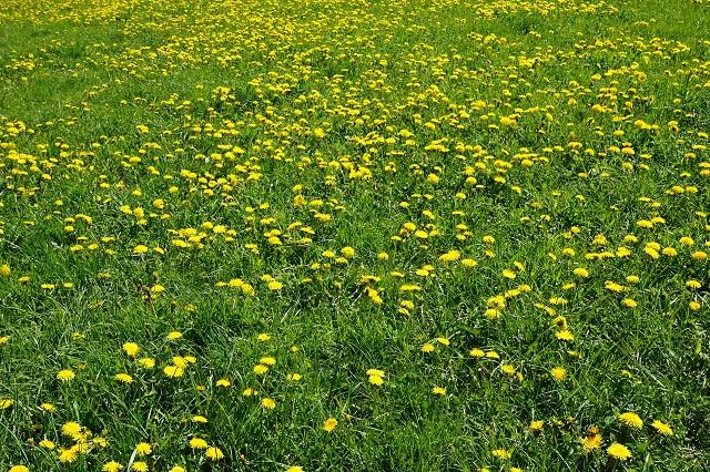 meadow-1387395_1920.jpg