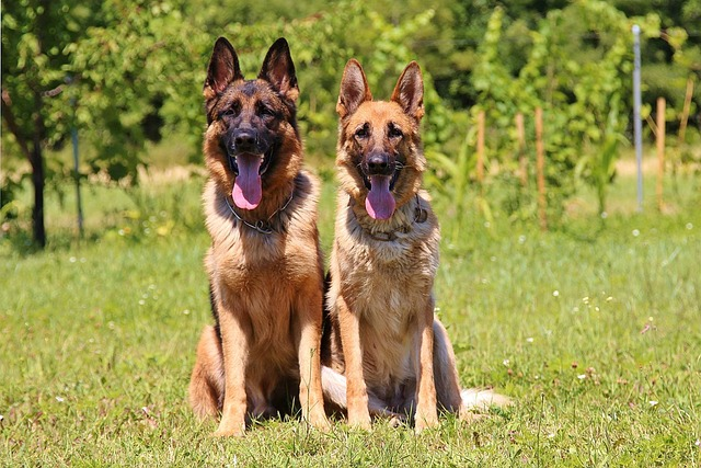 dogs-888415_640.jpg