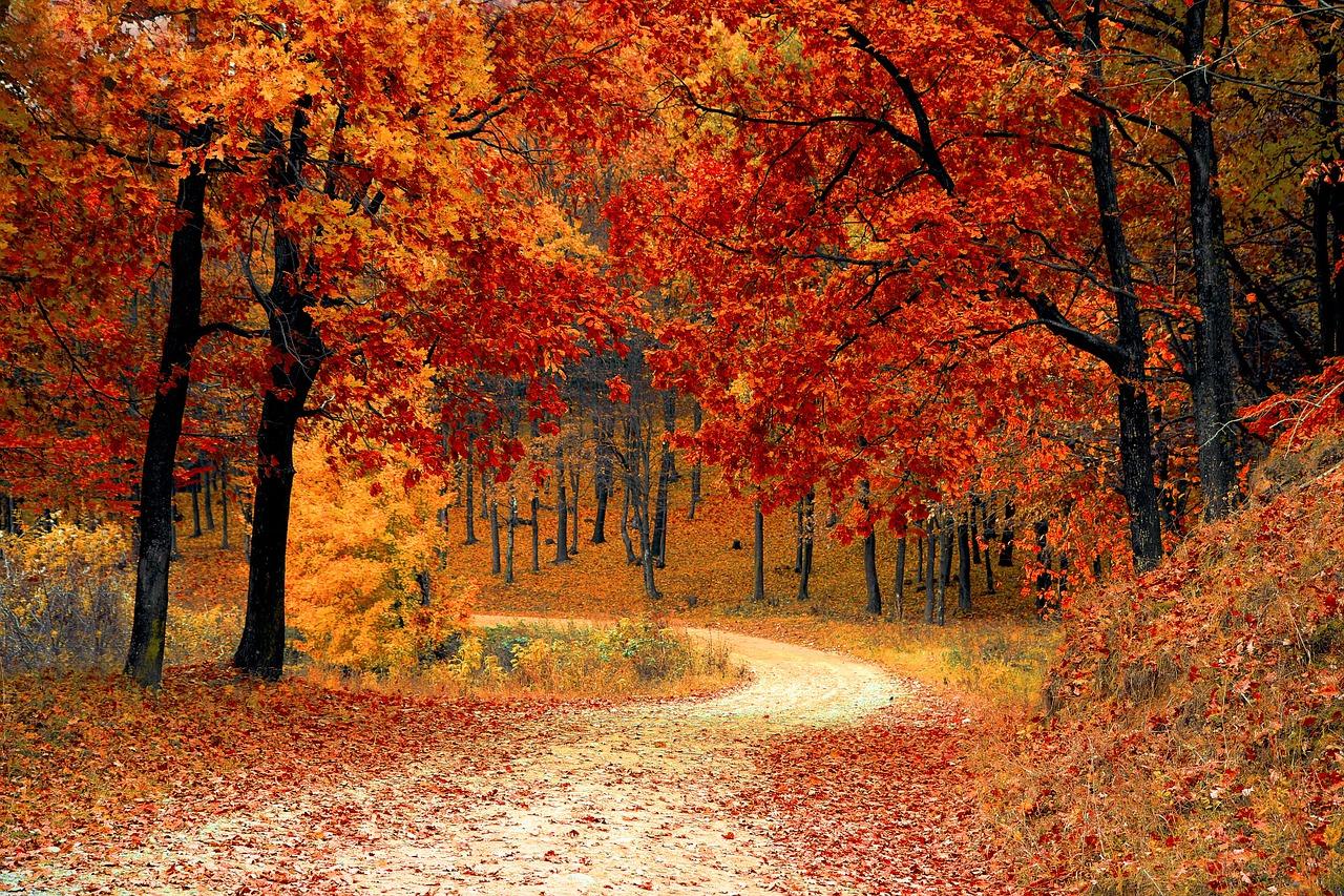 秋の入り口.jpg