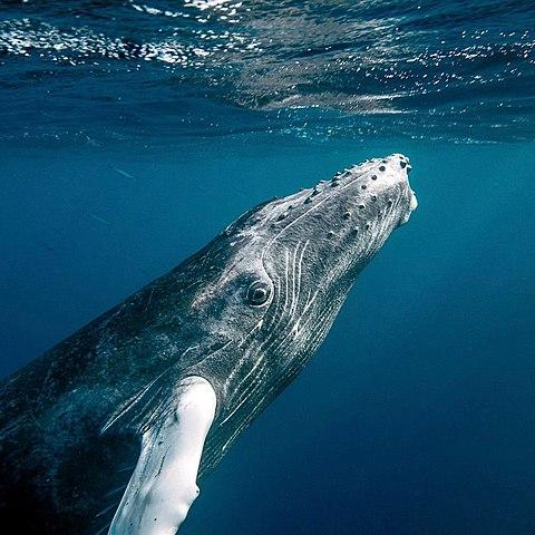 whalesong01.jpg
