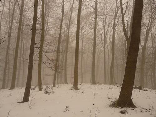 おばけロープの森